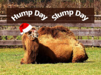 Hump Day, Slump Day: Reenergize Before the Holidays